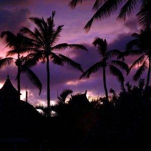 ハワイの景色
